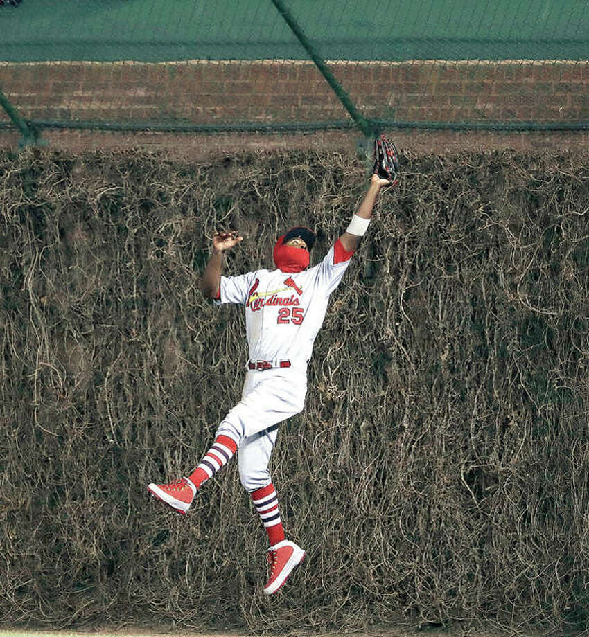 The Cardinals' Dexter Fowler goes high against a Wrigley Field outfield wall covered with still brown ivy to catch a fly ball hit by Chicago's Javier Baez in the fourth inning Tuesday. Photo:       AP