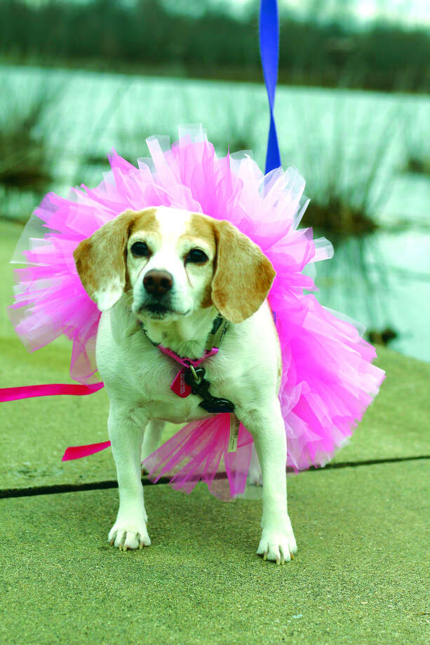 Lucy's birthday will be celebrated with a fundraiser Saturday at Big Daddy's.