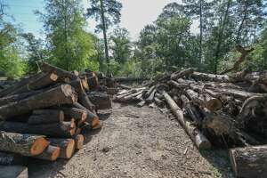 Trees felled during the restoration process are being milled on site and used to create wheel stops in parking lots and frames for field stations.