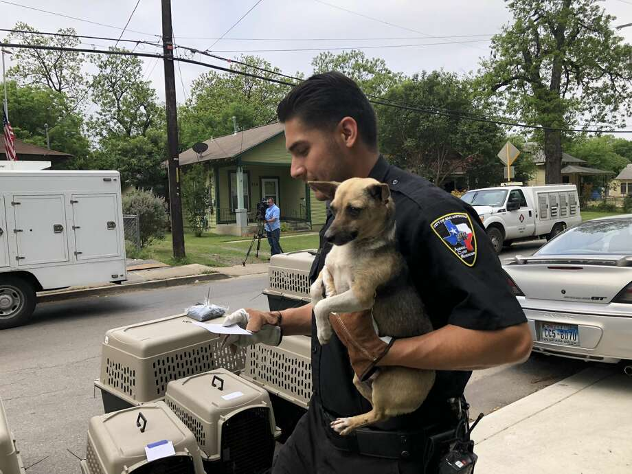 Animal Care Services seized more than 50 animals at a San Antonio home in the 200 block of Pendleton on Wednesday, April 18, 2018. Photo: Express-News