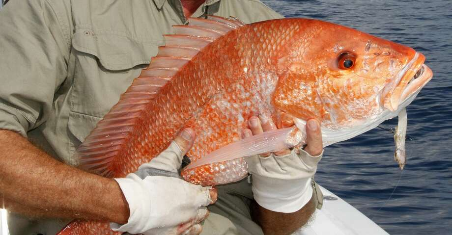 A federal decision earlier this week allowing each Gulf state to manage private-boat recreational fishing for red snapper off its coast means Texas offshore anglers will likely see an 82-day season, the longest federal-water season in a decade. Photo: Shannon Tompkins/Houston Chronicle
