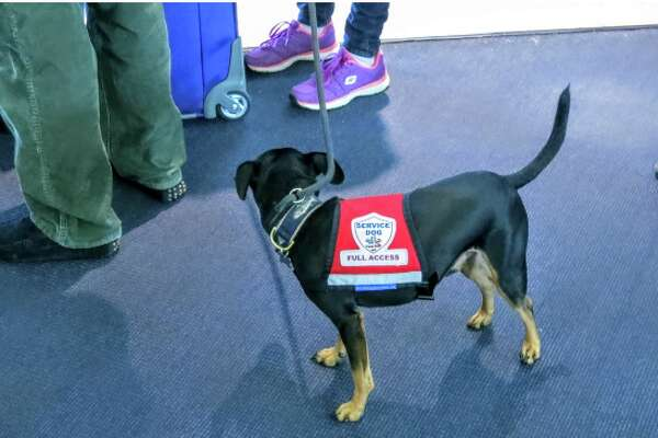 "Is this cute pup really needed for ""emotional support?"""