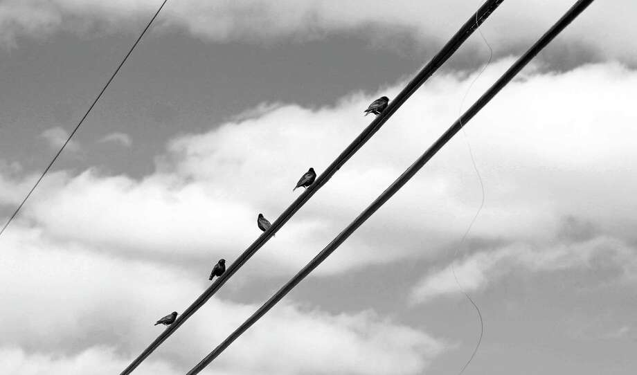 Birds sit on a wire at Southport Beach. Photo: Genevieve Reilly / Hearst Connecticut Media / Fairfield Citizen