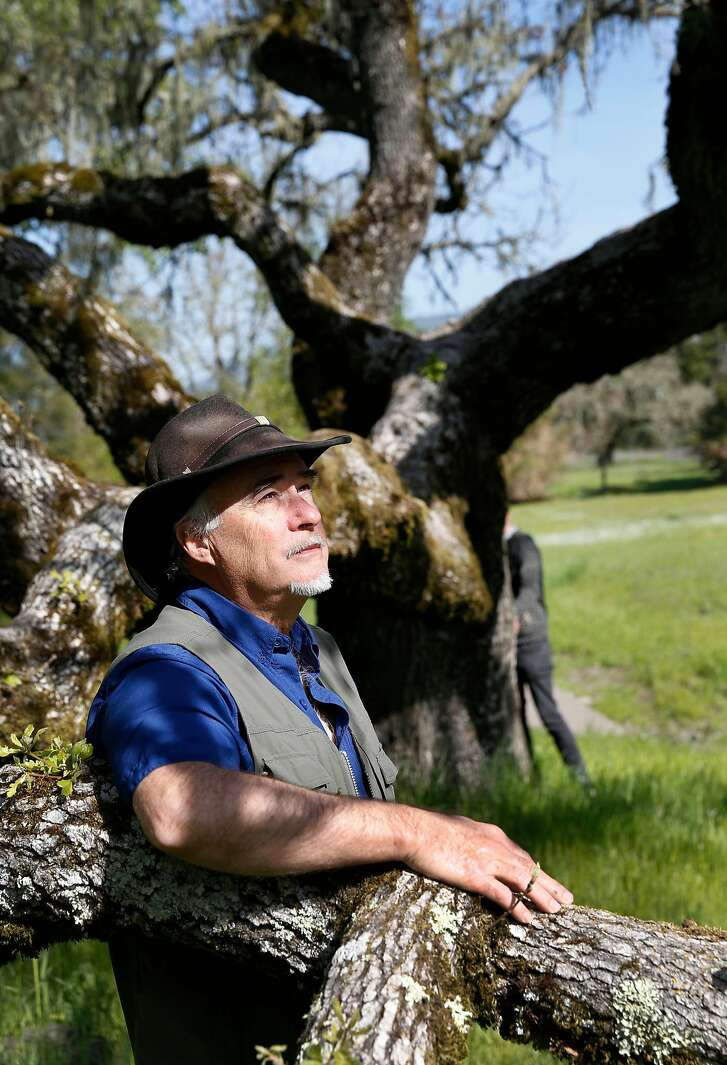 """Forest Therapy Guide Amos Clifford spends some time at Crane Creek Regional Park in Santa Rosa, Calif., on Tuesday, April 3, 2018 as he explains """"forest bathing"""" which is a movement that teaches sensory connection and awareness of place."""