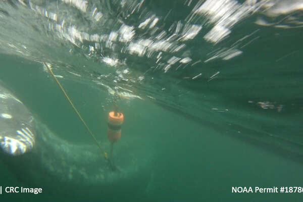 Rescuers are looking for a gray whale first spotted entangled in fishing gear last week.