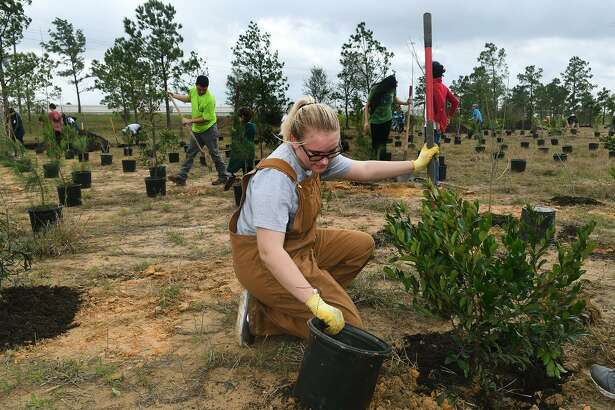 Trinity DePaulis, 17, a junior at Cy Woods High School, works for the school's team during the Houston Area Urban Foresty Council's 11th annual tree planting competition held at the detention basin on Texas 249 and Humble Road on Feb. 24, 2018. (Photo by Jerry Baker/Freelance)