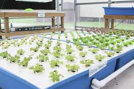 Wunderlich Intermediate School partnered with Kinsmen Lutheran Church and Sustainable Harvesters to start an aquaponic garden that will grow produce as part of the school's food pantry.