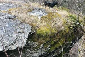 The Albany County Sheriff's Office saved this three-legged dog Wednesday from a cliff in Thacher Park.