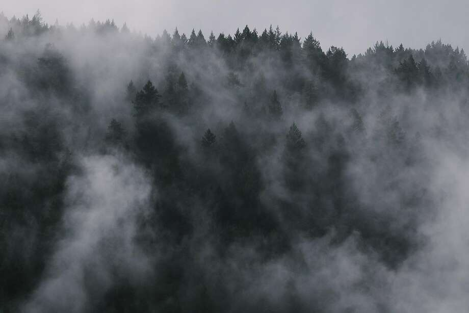 Fog lingers over the trees near Waterhorse Ridge Vineyard in Cazadero. Photo: Mason Trinca / Special To The Chronicle