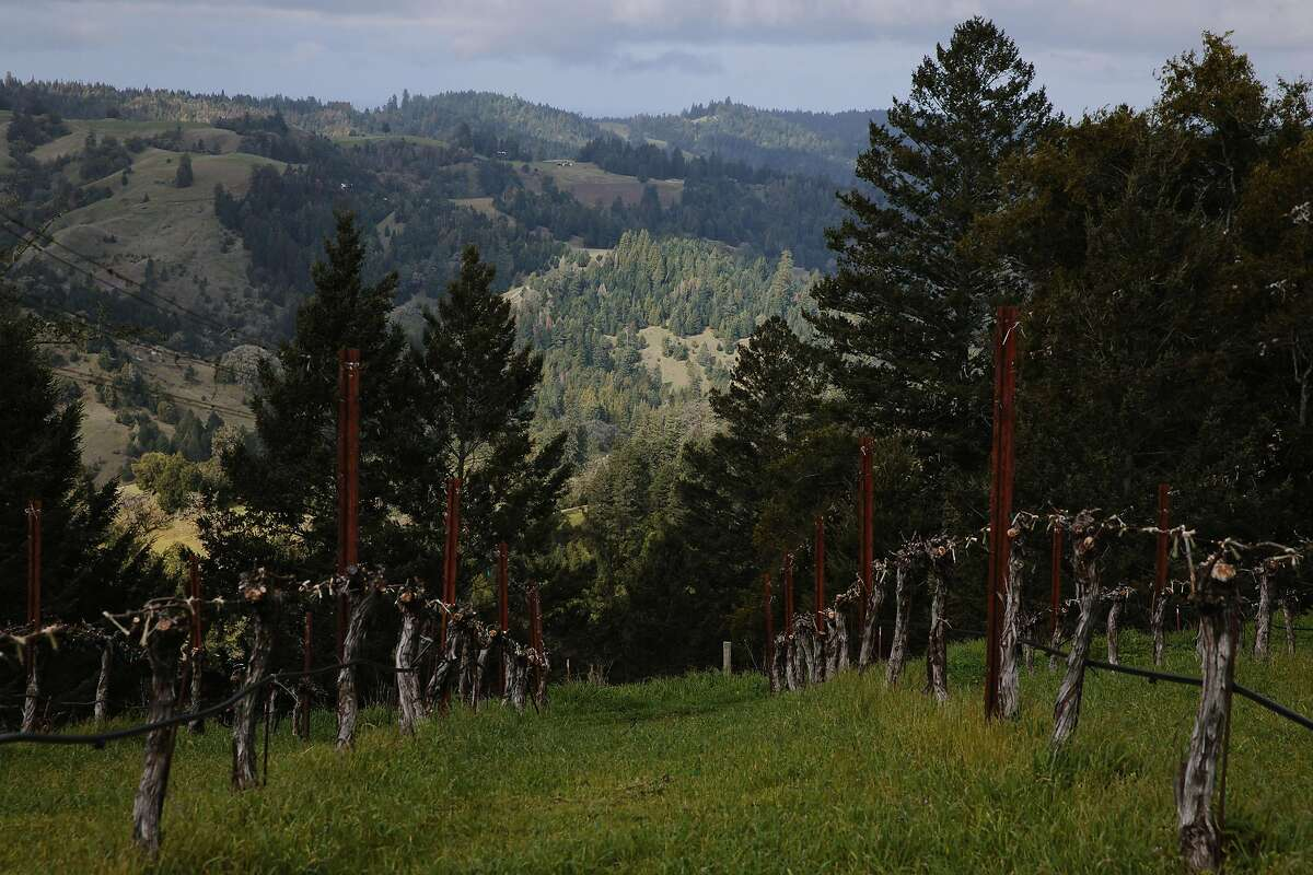 Waterhorse Ridge Vineyard photographed in Cazadero, Calif., Friday, March 23, 2018.