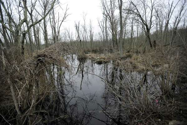 The Great Swamp can be seen on either side of Farmingville Road in Ridgefield, Thursday, April 19, 2018.