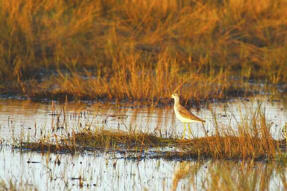 The 8,200-acre tract of Sabine Ranch transferred by The Conservation Fund to McFaddin National Wildlife Refuge earlier this month holds some of the best remaining wetlands and waterfowl habitat on the upper Texas coast.