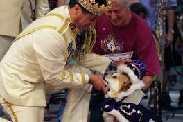 """Rey Feo LXX Kenneth Flores (left) places the crown on El Rey Fido XVI, Jerry, with owner Robert Rosenthal (right) during San Antonio Humane Society's 2018 El Rey Fido Coronation on Saturday, Apr. 21, 2018. Jerry, a mixed breed, was rescued by Robert and Jill Rosenthal of Alamo Heights. This year's court featured five pooches, including Squish, the brindle rescue dog with the """"semicolon face."""" More than $50,000 was raised for the rescue organization."""