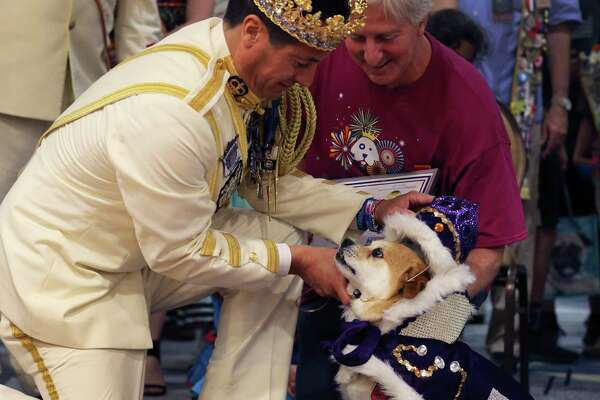 "Rey Feo LXX Kenneth Flores (left) places the crown on El Rey Fido XVI, Jerry, with owner Robert Rosenthal (right) during San Antonio Humane Society's 2018 El Rey Fido Coronation on Saturday, Apr. 21, 2018. Jerry, a mixed breed, was rescued by Robert and Jill Rosenthal of Alamo Heights. This year's court featured five pooches, including Squish, the brindle rescue dog with the ""semicolon face."" More than $50,000 was raised for the rescue organization."