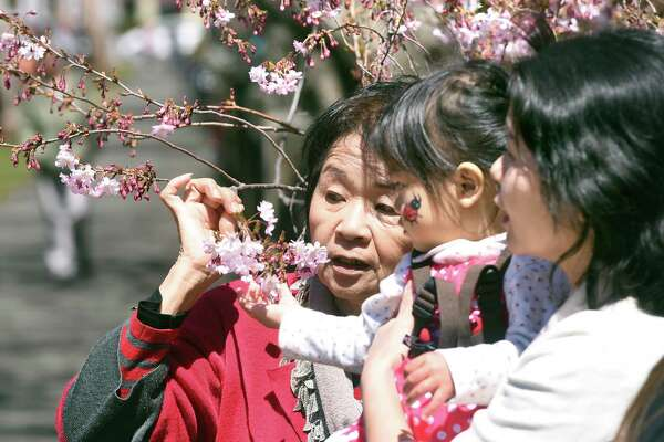 Aya Mejica (center), 1/1/2, of Forest Hills, New York, inspects the cherry blossoms on a tree in Wooster Square Park with her grandmother, Shizue Yamaguchi (left), and mother, Satoko Mejica (right), during the 45th annual Cherry Blossom Festival in New Haven on April 22, 2018.