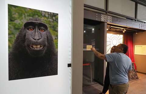 Monkey in selfie case has no right to sue for copyright
