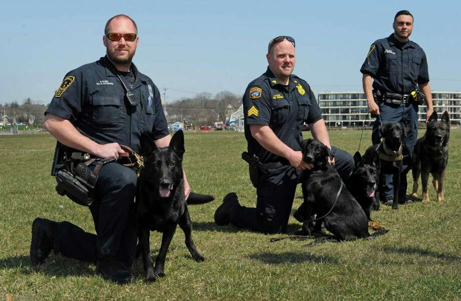 The Norwalk Police Department K-9 Division, including Officer Dave Peterson and his dog, Rainor, Sgt. Garrett Kruger and his dogs, Indy and Kimbo and Officer Ricky Montanez and his dogs, Kai and Luke at Veterans Memorial Park April 11. Photo: Erik Trautmann / Hearst Connecticut Media / Norwalk Hour