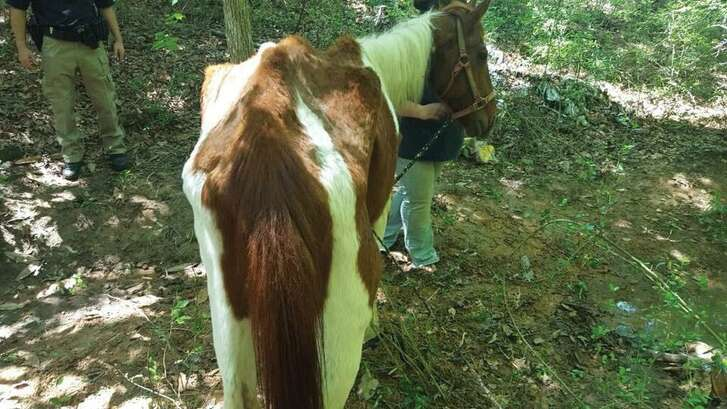 Three horses were rescued Wednesday from a property on Hicks Loop in Cleveland by the San Jacinto County Pct. 3 Constable's Office. The horses are now in the care of a horse rehabilitation ranch.