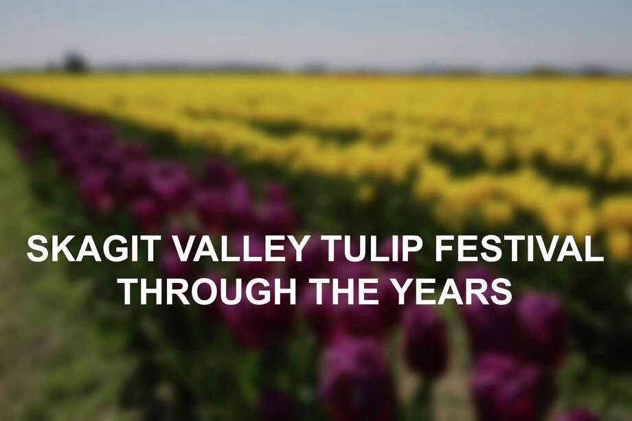 Skagit Valley Tulip Festival on Wednesday, April 25, 2017. The tulip festival finishes up at the end of April. Photo: GENNA MARTIN, SEATTLEPI.COM / SEATTLEPI.COM