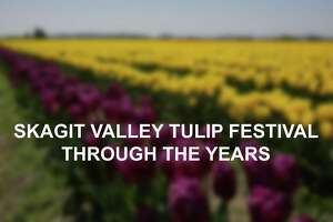 Skagit Valley Tulip Festival on Wednesday, April 25, 2017. The tulip festival finishes up at the end of April.