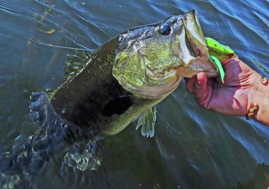 This five-pound bass' lip sports Livingston Lures' first soft-plastic lure, the Freddy B., a model that produces frog sounds that sold out a shipment of 10,000 in two days this spring. Photo: John Goodspeed /For The Express-News