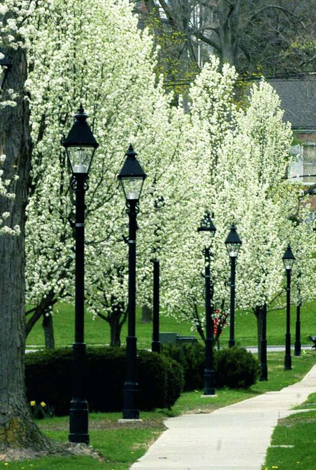 File photo of a sidewalk and trees along New Milford Village Green. Photo: Norm Cummings / Norm Cummings / The News-Times
