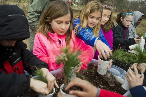 MacKenzie Nickel, 9, left, and Malena Troncoso Sarni, 9, right, place white pine saplings into cups with soil during a presentation by Dow Gardens staff about trees for Woodcrest Elementary fourth graders on Wednesday, April 25, 2018 at St. Mary's Park in Midland. (Katy Kildee/kkildee@mdn.net)