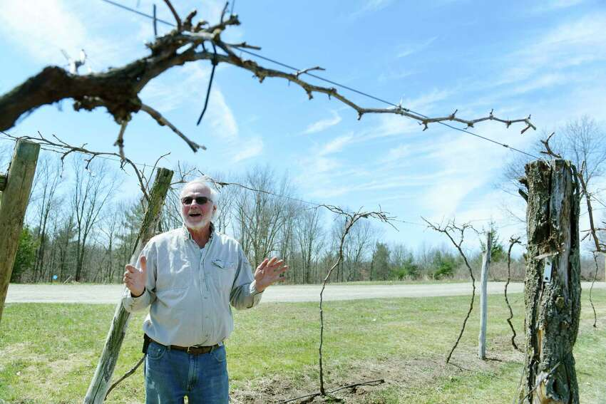 Amorici Vineyard owner, Joe Messina, stands in a row of Marquette grape vines at his vineyard on Tuesday, April 24, 2018, in Valley Falls, N.Y. (Paul Buckowski/Times Union)