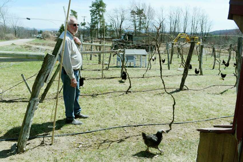 Amorici Vineyard owner, Joe Messina, stands in a row of grape vines at his vineyard on Tuesday, April 24, 2018, in Valley Falls, N.Y. Messina uses chickens to fertilize the ground and for pest control, eliminating the use of pesticides and commercial fertilizers. (Paul Buckowski/Times Union)