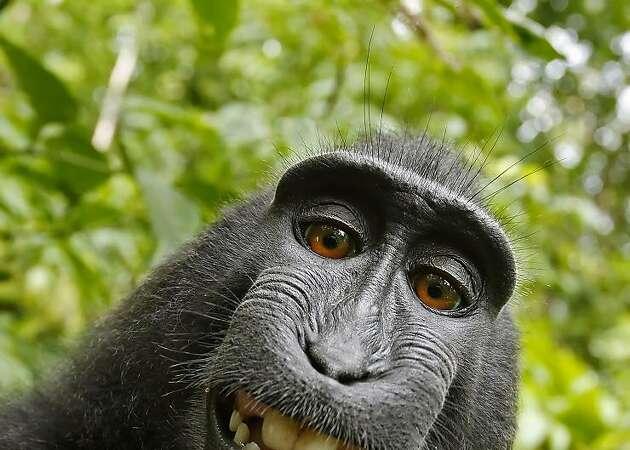 Last Word | Of monkeys and men
