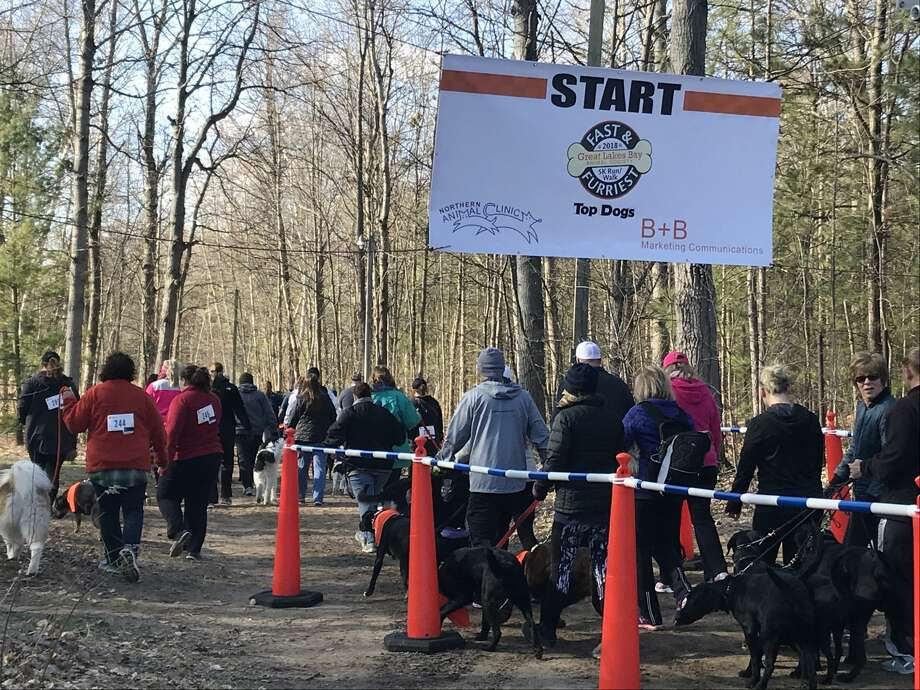 About 250 people and 120 dogs raced in the Fast and Furriest 5K Run/Walk on April 28 at City Forest in Midland to benefit the Great Lakes Bay Animal Society. Photo: Kate Carlson