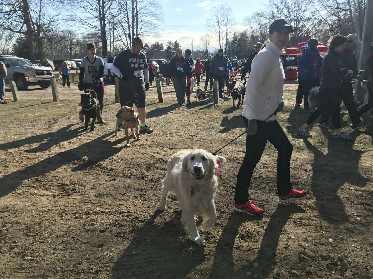 About 250 people and 120 dogs raced in the Fast and Furriest 5K Run/Walk on April 28 at City Forest in Midland to benefit the Great Lakes Bay Animal Society.