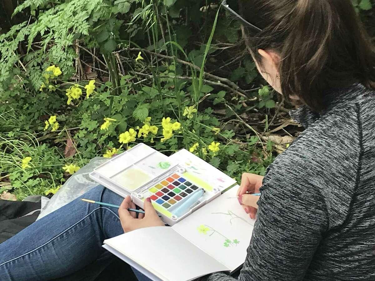 Yevgeniya Shkil sketches yellow flowers at the BioBlitz hosted by Presidio Trust on Saturday.