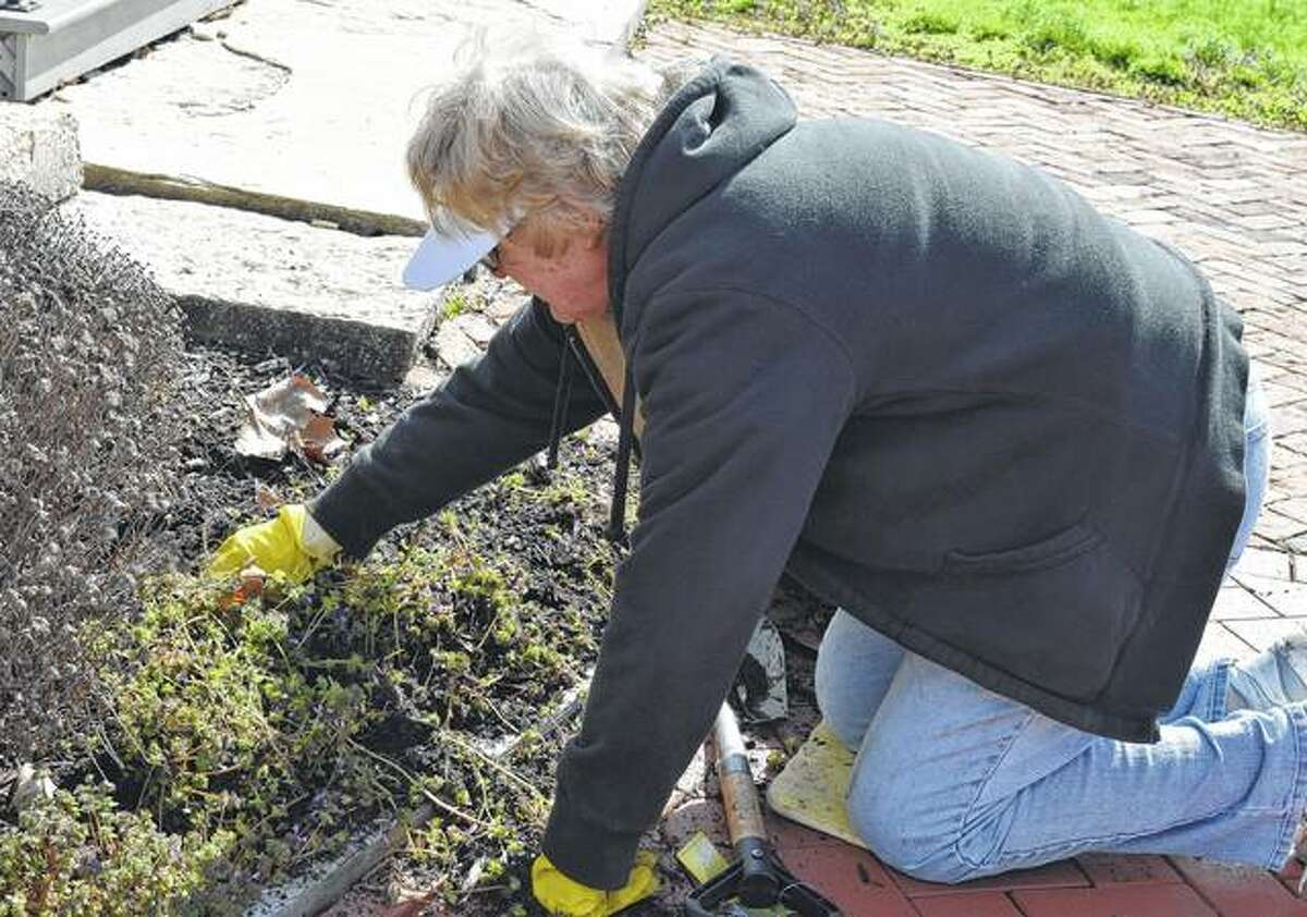 Nancy Hamby removes ground covering from flowers.
