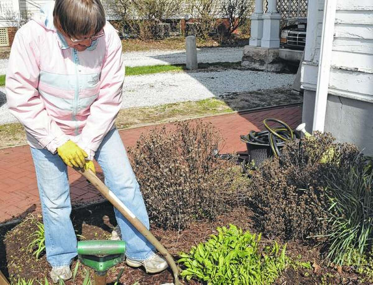 Anita Moody digs up a plant from the garden