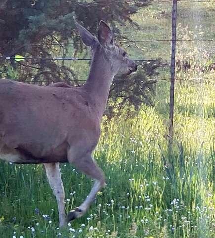 Police search for culprit leaving Oregon deer walking around