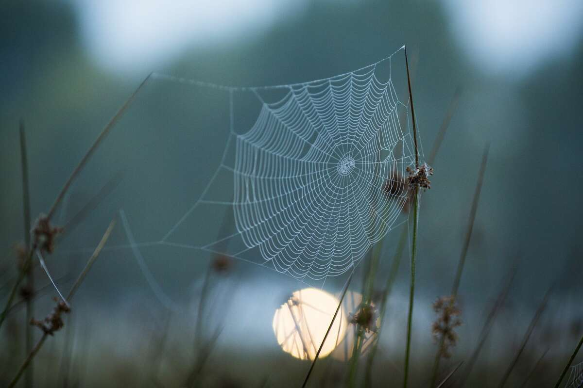 Dealing with spiders Cut the clutter.Spiders love a good hiding spot. Don't give them free real estate by having books, shoes and clothes sprawled about. Outside, that means trimmingweeds and cutting tall grass.