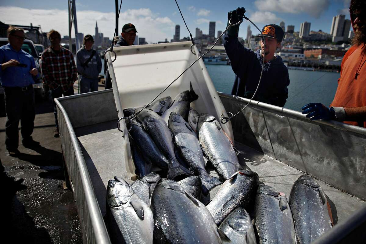Chad Anthony (second from right), San Francisco Community Fishing Association purveyor, and Mike McGowan (partially seen at right), with the San Francisco Community Fishing Association, help unload salmon from Jason Salvato's boat the Willanina, at the San Francisco Community Fishing Association on Pier 45 on Monday, May 5, 2014 in San Francisco, Calif.
