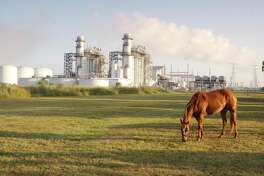 A horse grazes near Calpine's Brazos Valley Power Plant in Richmond, Texas. The company has a fleet of natural gas fired plants and is uniquely suited to take advantage of the demands for cleaner-burning electricity generation.  Jim Olive Photography