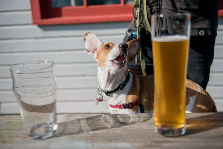 Dogs are welcome at The Rake, outside or on the patio.