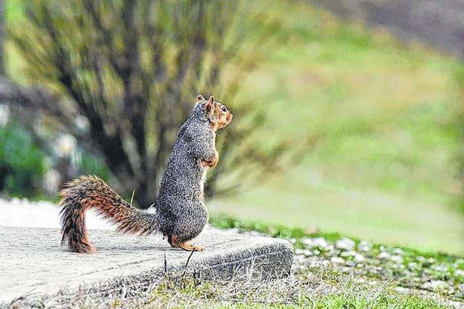 A squirrel scopes its surroundings from a backyard porch.
