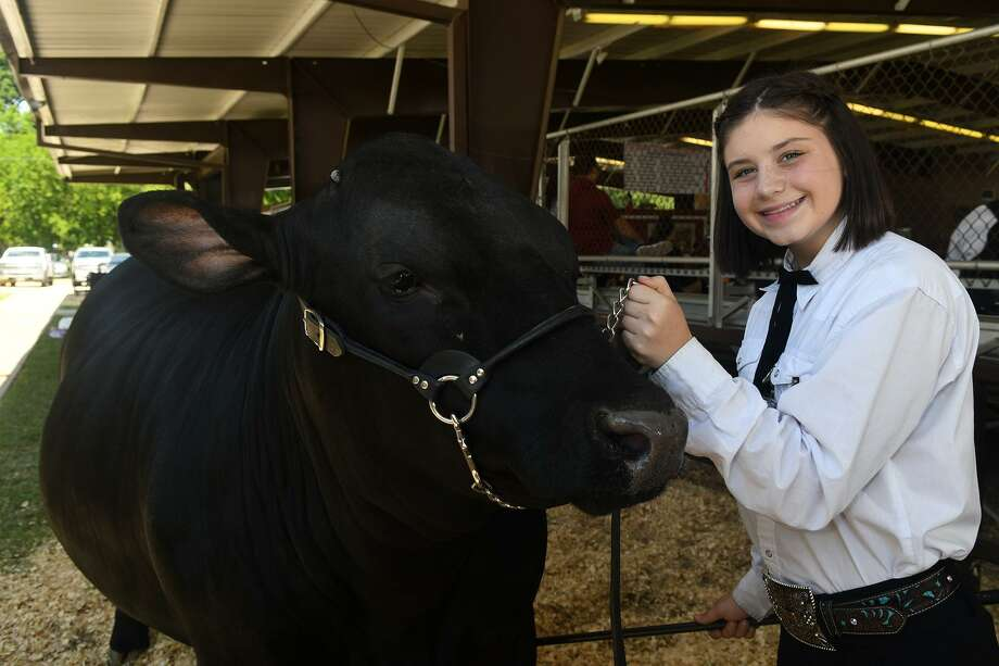 "Kyla Viereck, a freshman at Spring High School, shares a moment with ""Bubba"", her grand champion steer, before the opening ceremony and live auction at the 67th Annual Spring Livestock Show and Fair at Nagy Pavilion on April 28, 2018. (Photo by Jerry Baker/Freelance) Photo: Jerry Baker, Freelance / For The Chronicle / Freelance"