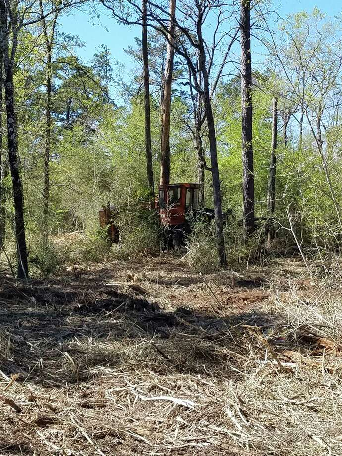 Work began on the Richards-Raven Equestrian Trail in the Sam Houston National Forest in March. The trail is a project of the Sam Houston Trails Coalition. A fundraiser is set for Saturday to raise money to continue the work on the trail.