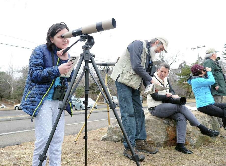 In recognition of the Year of the Bird, Audubon Greenwich will hold a special birding field trip to count as many birds as possible on the annual Global Big Day. The event will be from 10 to 11:30 a.m. Saturday at Grass Island Park near downtown Greenwich. Bring binoculars and a field guide if you have them or borrow one from Audubon. Beginners and all ages welcome. Meet in the first parking lot on the right at 10 a.m. To RSVP, contact Ted Gilman at 203 930-1353 Photo: File / Bob Luckey Jr. / Hearst Connecticut Media / Greenwich Time