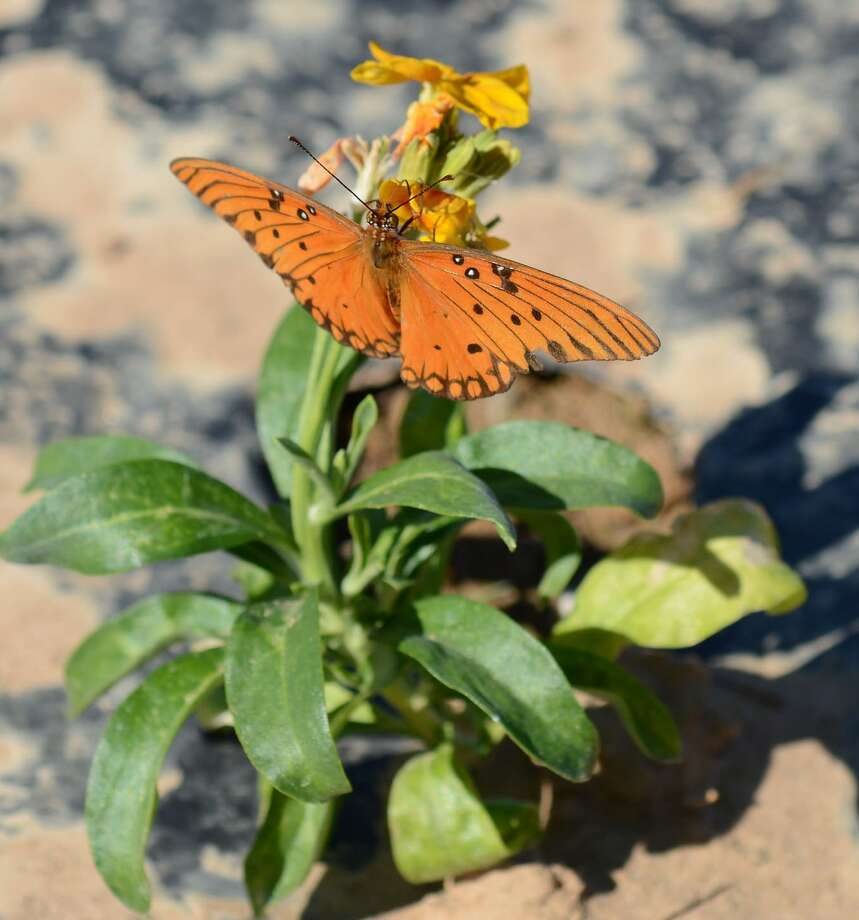 Pollinators such as butterflies are of vital importance to agriculture and for maintaining ecosystem health.