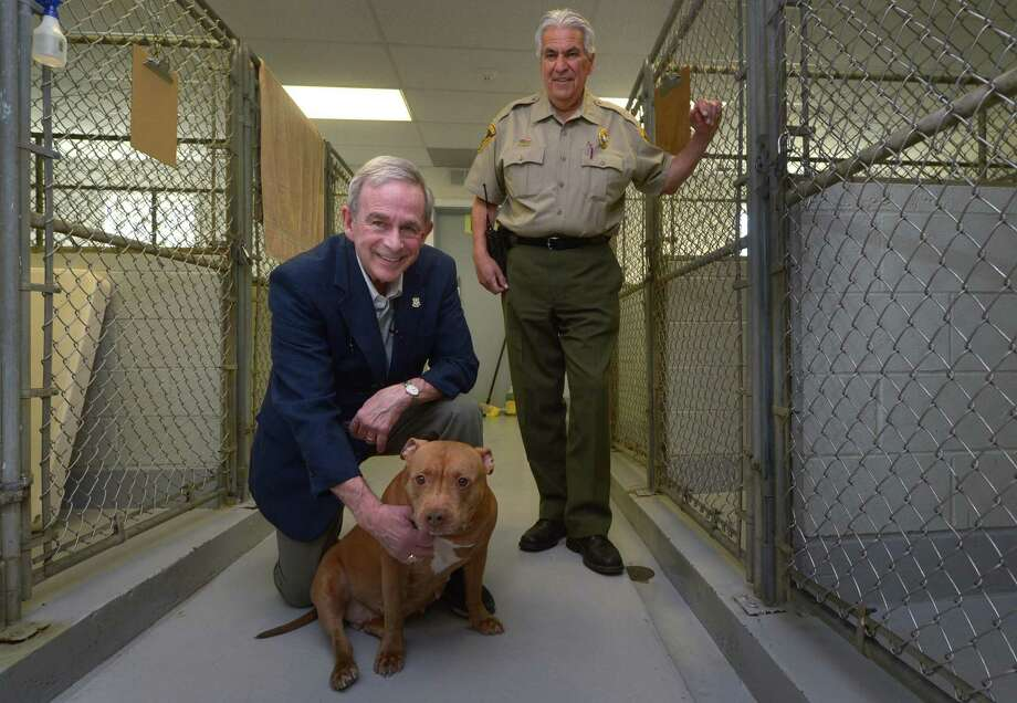 Former State Representative, G. Kenneth Bernhard, greets Mia, a Staffordshire Terrier Mix, as Westport Animal Control Officer Joe Saponare looks on Thursday, May 3, 2018,  at the Animal Control facility in Westport, Conn. Bernhard was recently appointed an animal advocate for the Bridgeport courts Photo: Erik Trautmann / Hearst Connecticut Media / Norwalk Hour