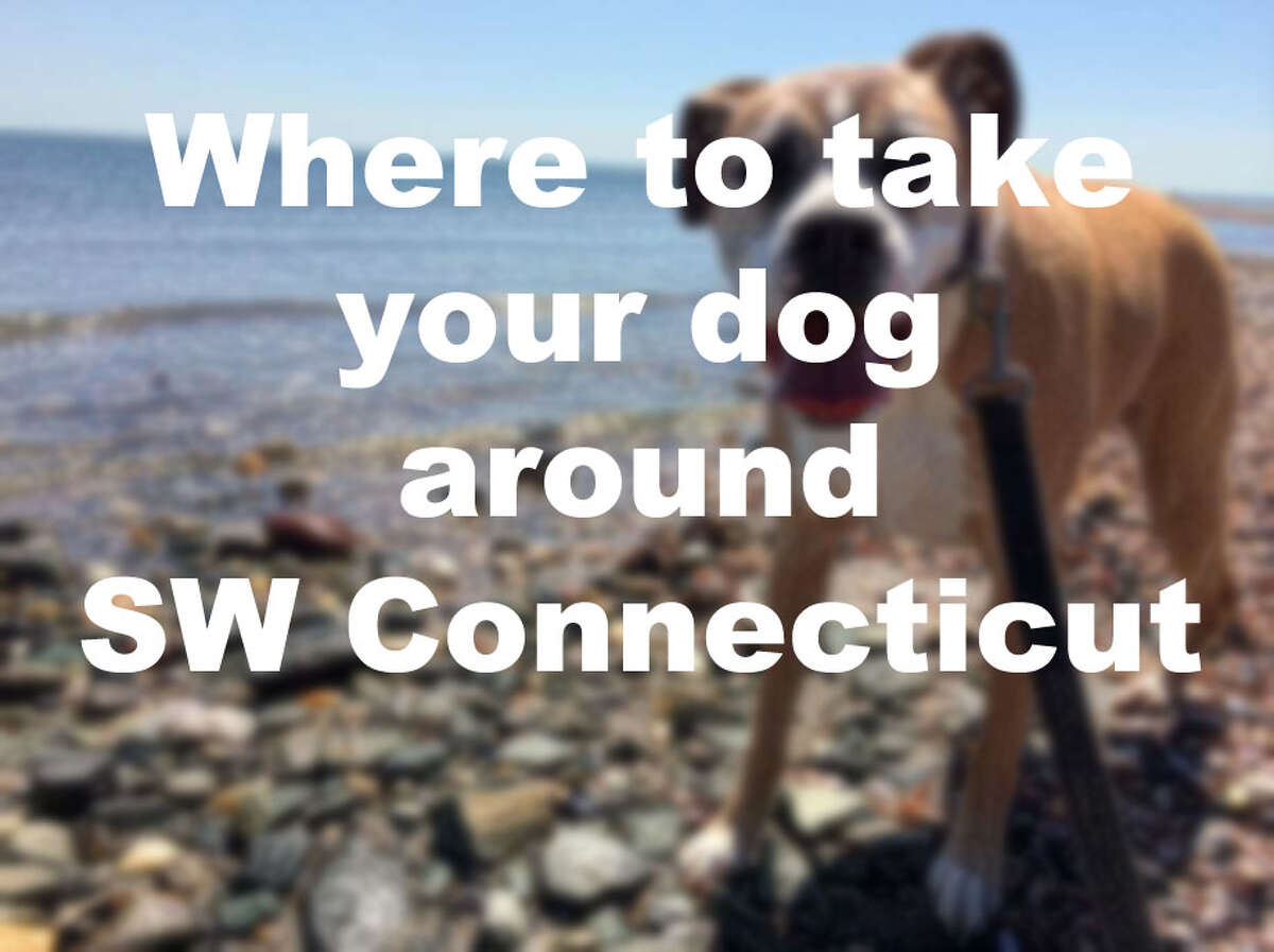 Here's where to take your dog around SW Connecticut this summer: