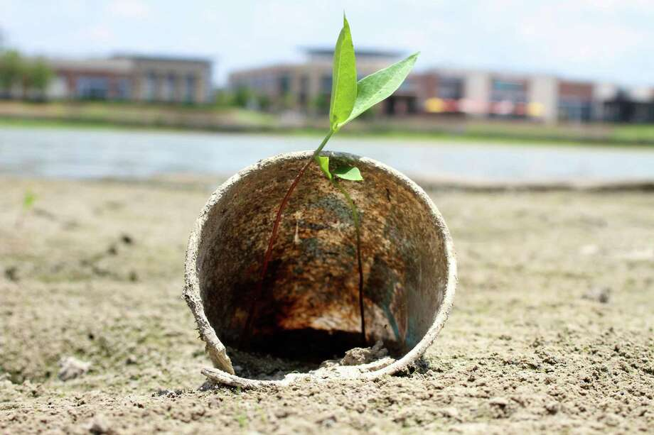 In 2017, amidst what some called the worst drought in 60 years, a plant grows in a cup that, in years past, would have sat at the bottom of Lake Houston. Photo: Jason Fochtman /The Advocate / The Advocate