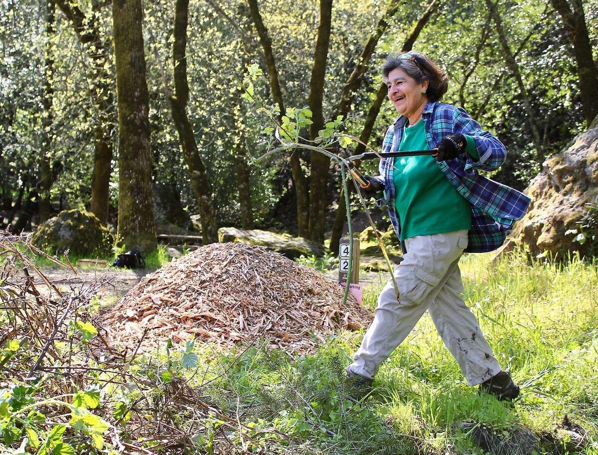 Volunteer Elisa Rogalado removes blackberries at Sugarloaf Ridge SP campground. Harriot Manley April 2018