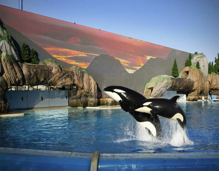 Shares of SeaWorld Entertainment Corp. spiked Tuesday after the Orland theme park company announced a 15 percent jump in attendance during the first quarter. Photo: Howard Lipin /TNS / San Diego Union-Tribune